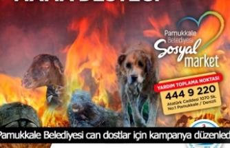 Pamukkale Belediyesi can dostlar için kampanya düzenledi