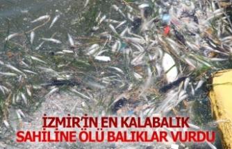 İzmir'in en kalabalık sahiline ölü balıklar vurdu!