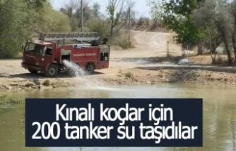 Kınalı koçlar için 200 tanker su taşıdılar