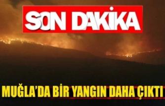 Muğla'da bir yangın daha çıktı!