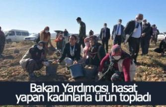 Bakan Yardımcısı Işıkgece patates hasadı yapan kadınlarla ürün topladı