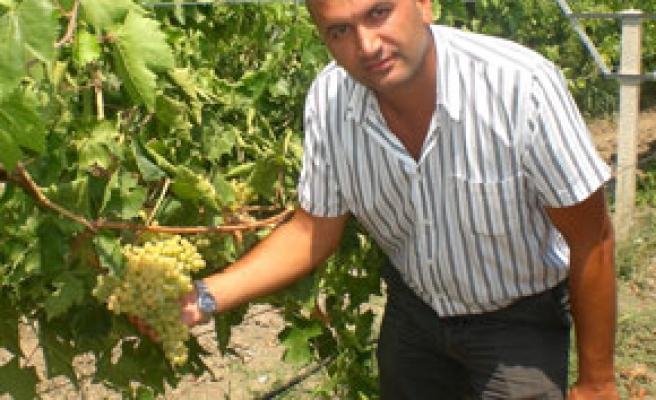 Türk üzümü kimlik kazandı
