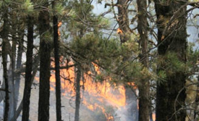 Orman yangınlarında risk dönemi başladı