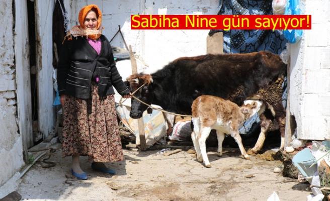 Sabiha Nine gün sayıyor!