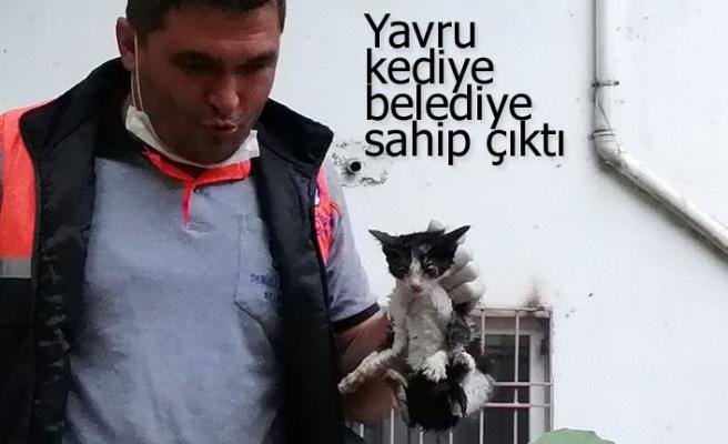 Yavru kediye belediye sahip çıktı
