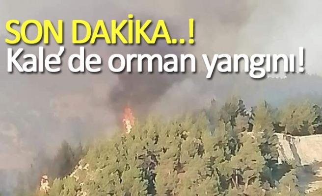 Kale'de orman yangını!