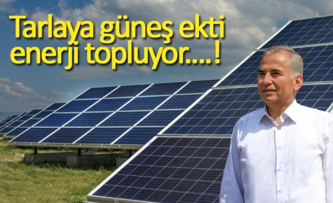 Tarlaya güneş ekti enerji topluyor!