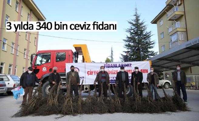 3 yılda 340 bin ceviz fidanı