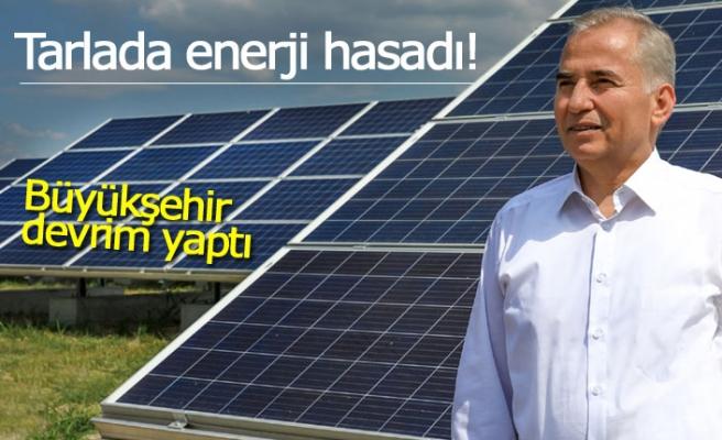 Tarlada enerji hasadı!