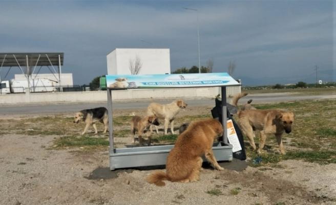 İzmir Bergama'da can dostlarının beslenme noktaları çoğalıyor
