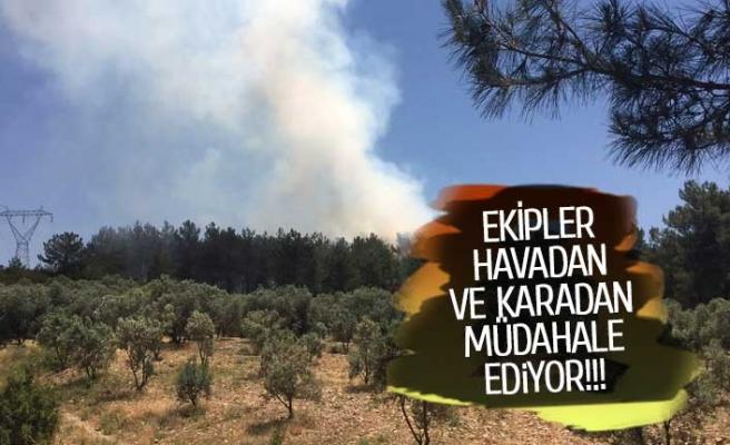 Ege'nin oksijen deposu yanıyor!