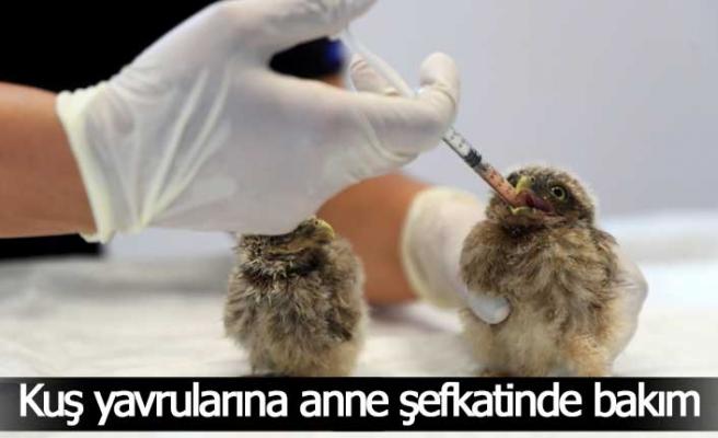 Kuş yavrularına anne şefkatinde bakım