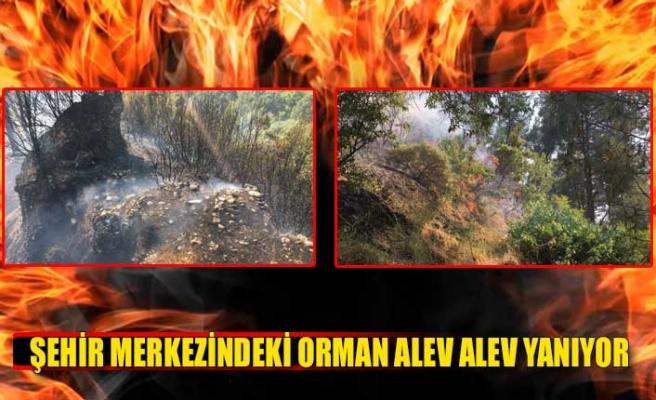 Şehir merkezindeki orman alev alev yanıyor!