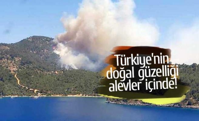 Türkiye'nin doğal güzelliği alevler içinde!