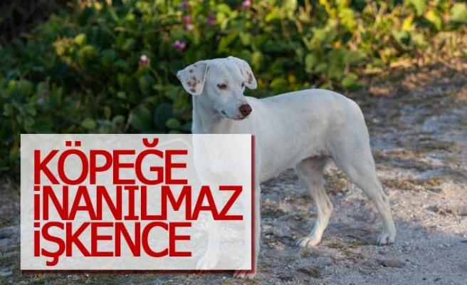 Köpeğe inanılmaz işkence