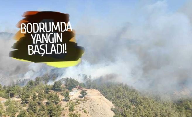 Bodrum'da bir yangın daha çıktı!