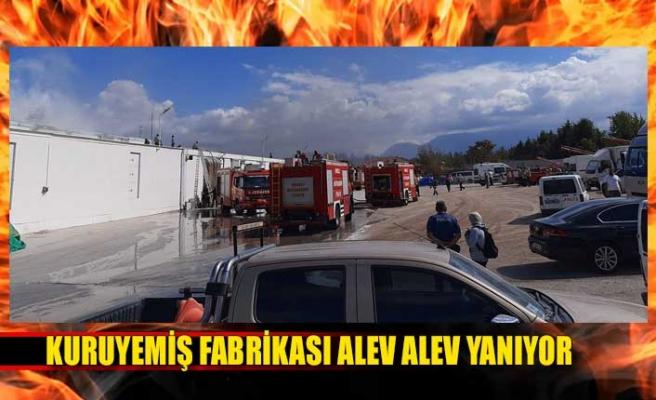Kuruyemiş fabrikası alev alev yanıyor GÖRÜNTÜLÜ)