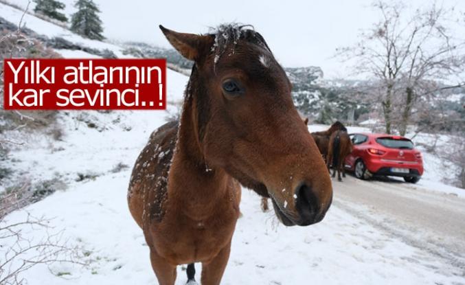 Yılkı atlarının kar sevinci!