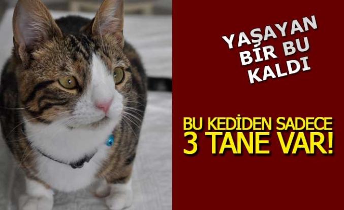 Türkiye'de bu özellikte üçüncü kedi!