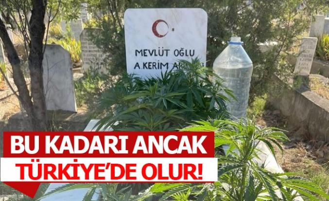 Bu kadarı ancak Türkiye'de olur