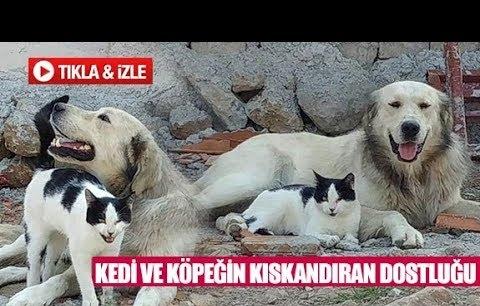 Kedi ve köpeğin kıskandıran dostluğu